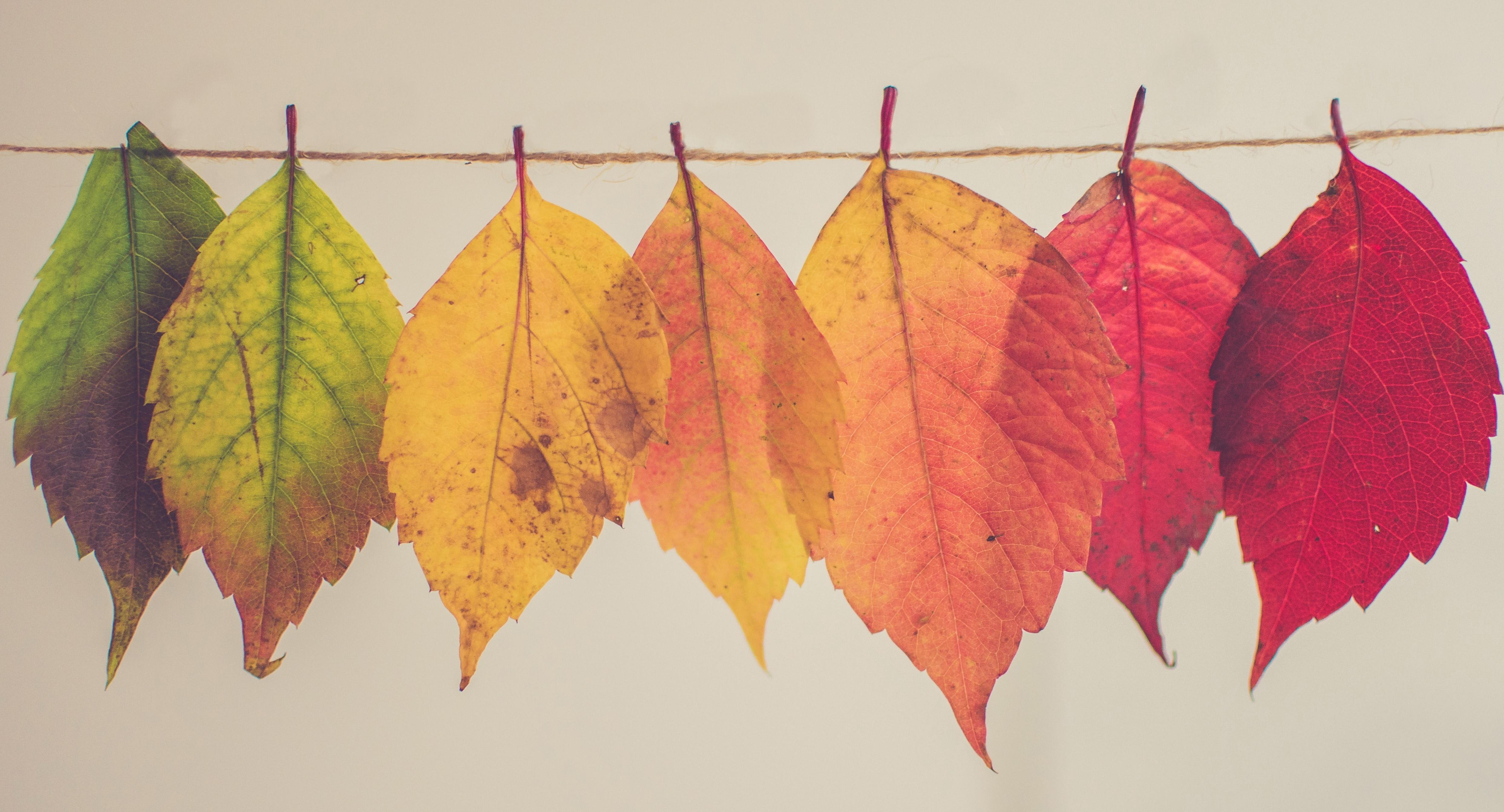Mes deux lectures d'automne, 3 et 9 novembre 2019